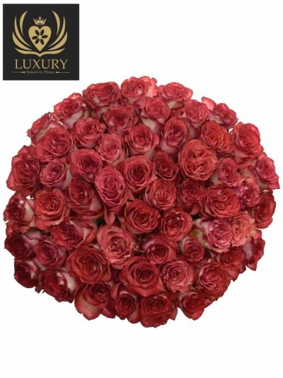 Kytice 55 luxusních růží DIABOLO 70cm
