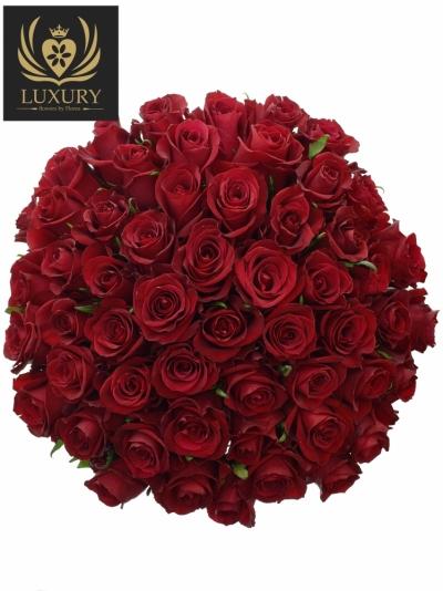 Kytice 55 luxusních růží EVER RED 60cm