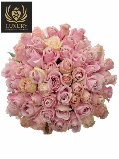 Kytice 55 luxusních růží PINK AVALANCHE+ 55cm