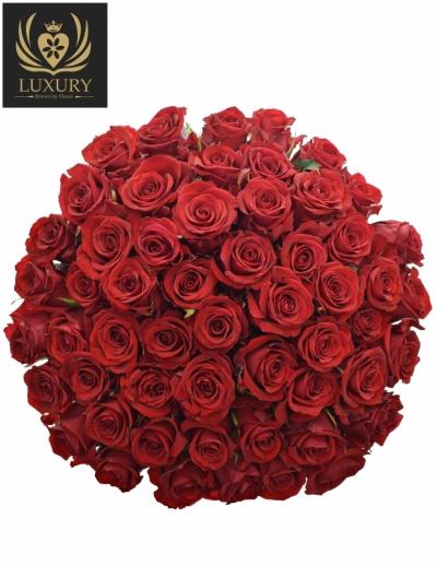 Kytice 55 luxusních růží RED EAGLE 90cm