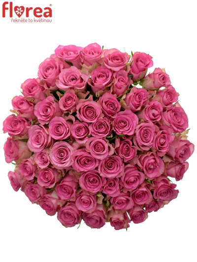 Kytice 55 růžových růží ROYAL JEWEL 50cm