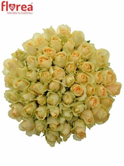 Kytice 55 meruňkových růží MAGIC AVALANCHE 40cm