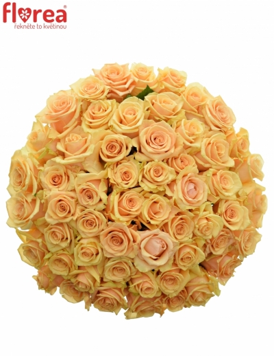 Kytice 55 meruňkových růží PRIMA DONNA