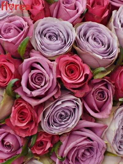 Kytice 55 míchaných růží DARIELLA 35cm