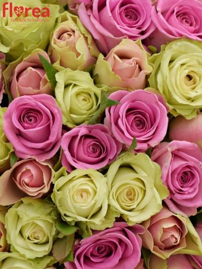 Kytice 55 míchaných růží FIOLA