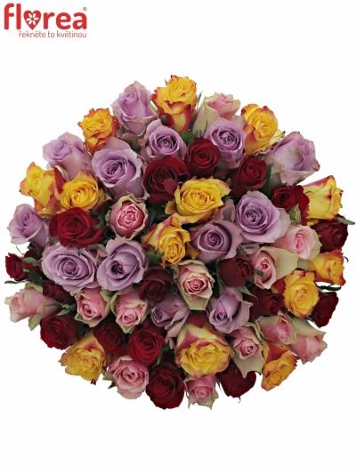 Kytice 55 míchaných růží MIRIAM 50cm