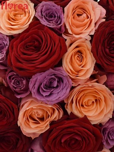 Kytice 55 míchaných růží RED LADY ORLEA 50cm