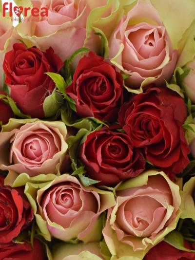 Kytice 55 míchaných růží ROSEBELLINE 50cm