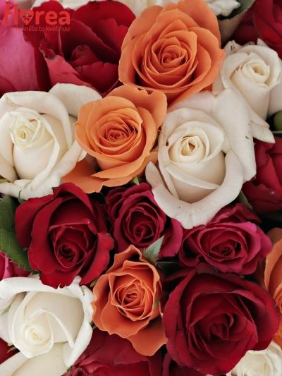 Kytice 55 míchaných růží SEVASTIANOS 40cm