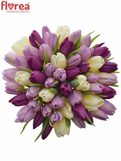 Kytice 55 míchaných tulipánů PINK VALENTIN 35cm