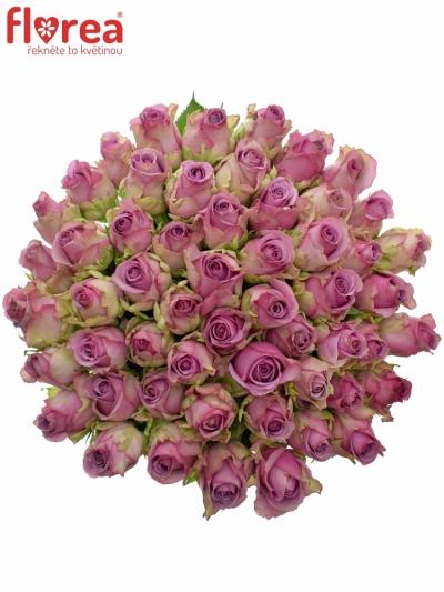 Kytice 55 modrofialových růží COOL WATER 60cm