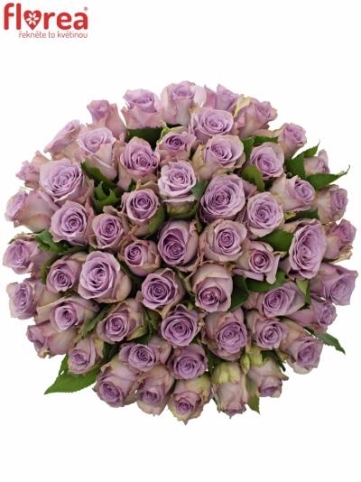 Kytice 55 modrofialových růží DANCING CLOUDS! 50cm
