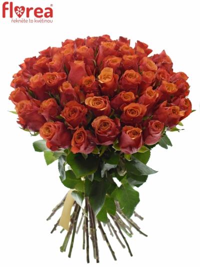 Kytice 55 oranžovočervených růží ESPANA 40cm
