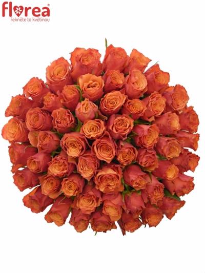 Kytice 55 oranžových růží DEVOTED