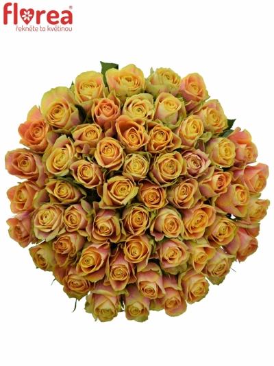 Kytice 55 oranžových růží MARACUJA 40cm