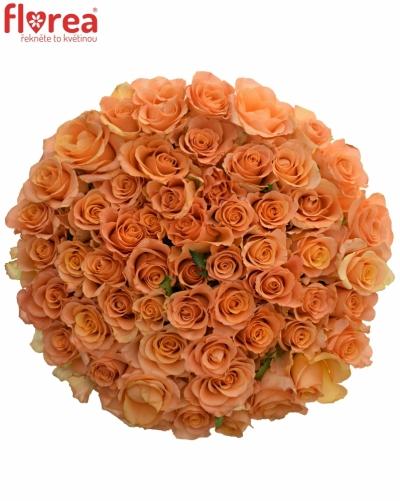 Kytice 55 oranžových růží TRIXX!