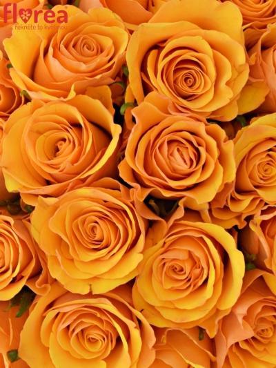 Kytice 55 oranžových růží TYCOON