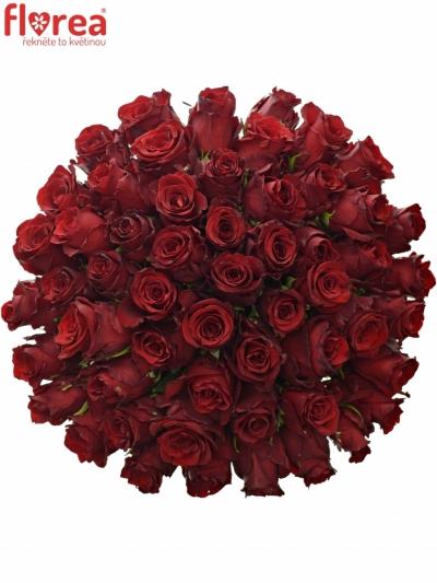 Kytice 55 rudých růží EXPLORER 60cm