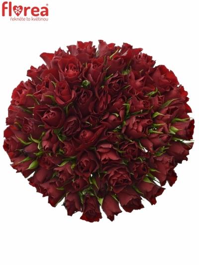 Kytice 55 rudých růží RED TIFFANY 50cm