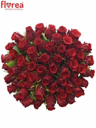 Kytice 55 rudých růží RED TORCH 60cm