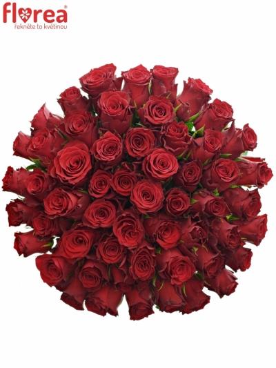 Kytice 55 rudých růží RHODOS 60cm