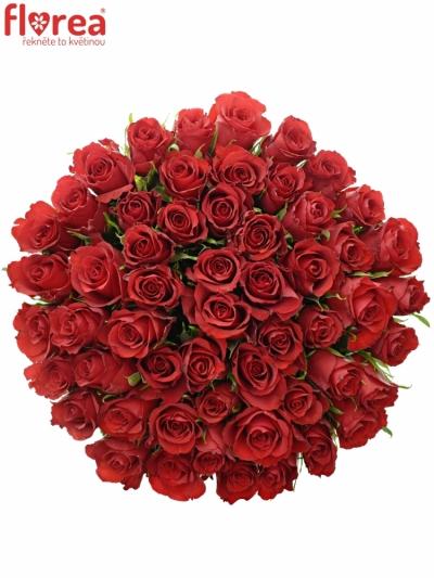 Kytice 55 červených růží RED CALYPSO 50cm