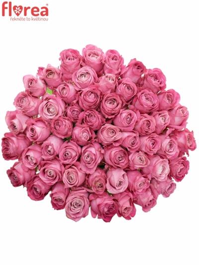 Kytice 55 růžových růží ALL 4 LOVE+ 90cm