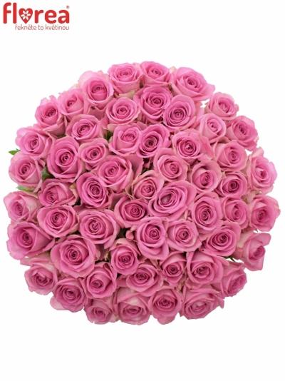 Kytice 55 růžových růží AQUA 40cm