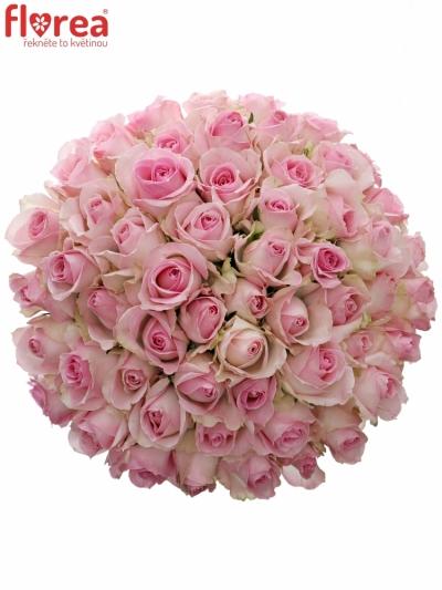 Kytice 55 růžových růží AVALANCHE SORBET+ 50cm