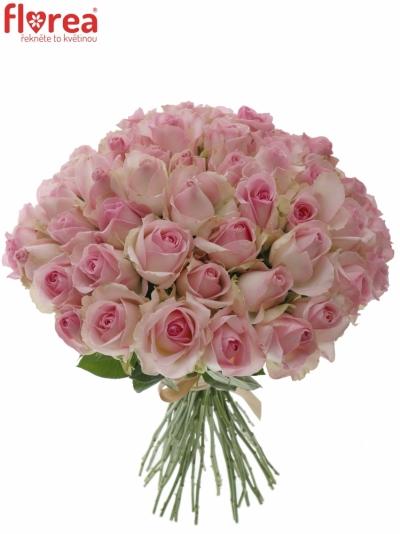 Kytice 55 růžových růží AVALANCHE SORBET+
