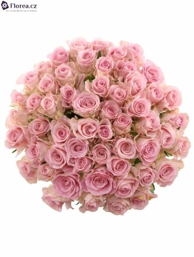 Kytice 55  růžových růží BABYFACE 50cm