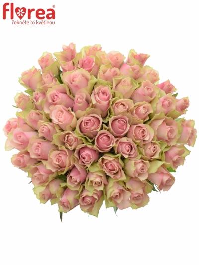 Kytice 55 růžových růží BELLE ROSE 50cm