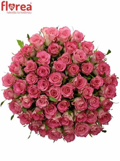 Kytice 55 růžových růží ENSEMBLE 50cm