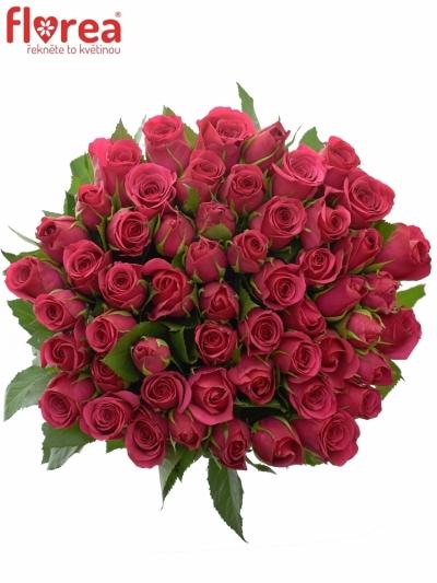 Kytice 55 růžových růží FUCHSIANA 60cm