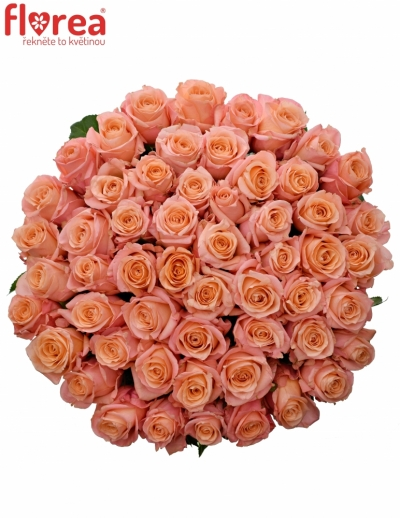 Kytice 55 růžových růží LADY MARGARET 60cm