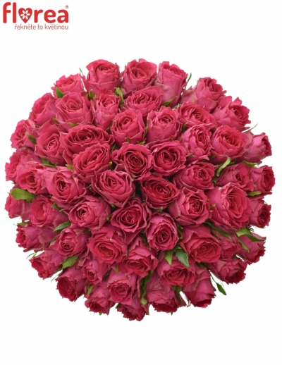 Kytice 55 růžových růží MADAM CERISE