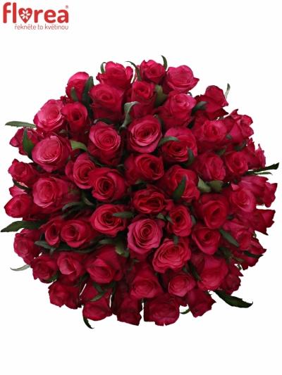 Kytice 55 růžových růží NATURES WILD