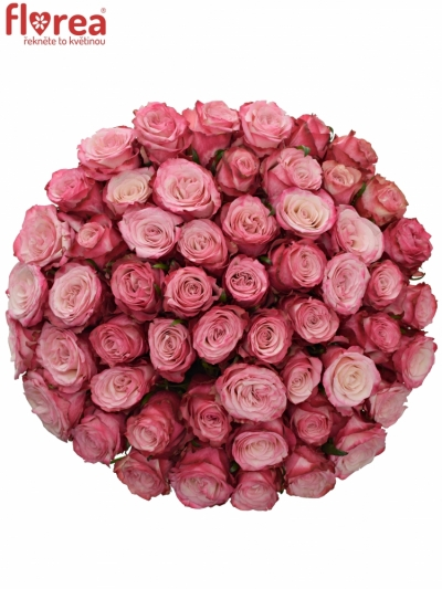 Kytice 55 růžových růží NO LIMIT 60cm