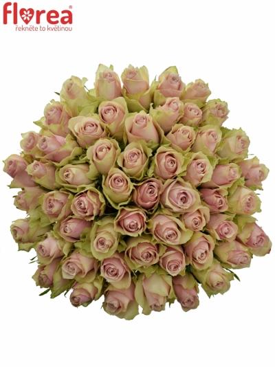 Kytice 55 růžových růží PINK ATHENA 50cm
