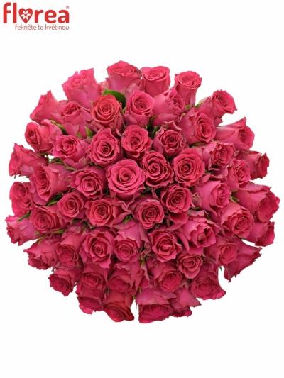 Kytice 55 růžových růží Pink Rhodos 40cm