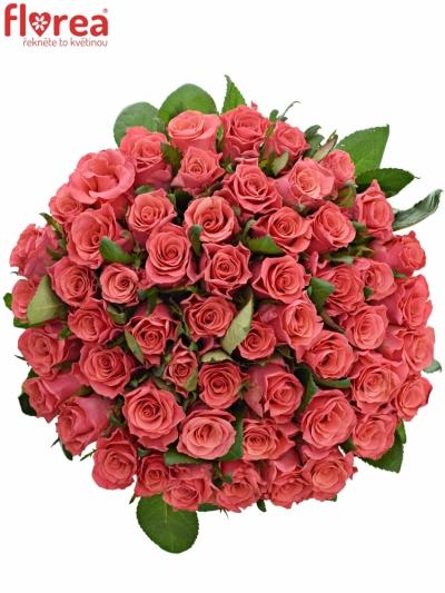 Kytice 55 růžových růží PINK TACAZZI