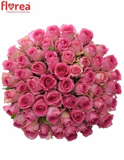 Kytice 55 růžových růží SHANGHAI LADY 50cm