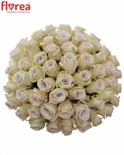 Kytice 55 světle fialových růží SILVERY FLAME 35cm