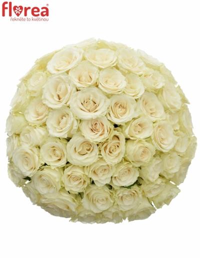 Kytice 55 světlekrémových růží SOLSY