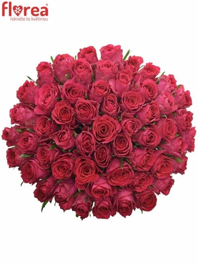 Kytice 55 vínových růží MADAM CERICE 40cm