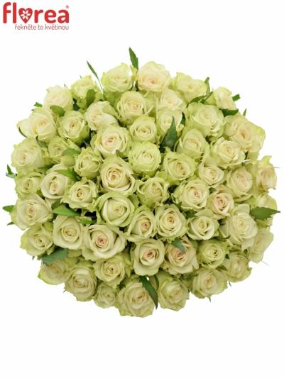 Kytice 55 zelených růží GREEN FASHION