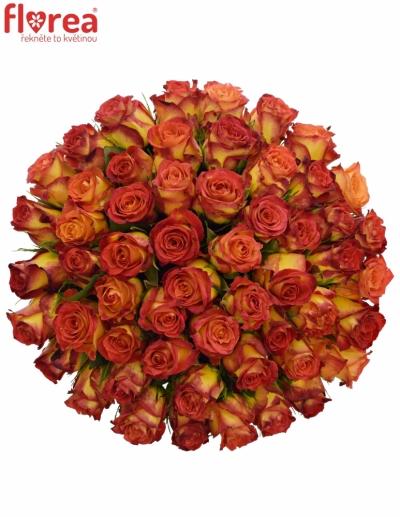 Kytice 55 žíhaných růží CATCH