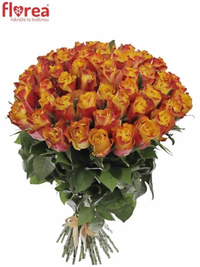 Kytice 55 žíhaných růží DOWNTOWN!