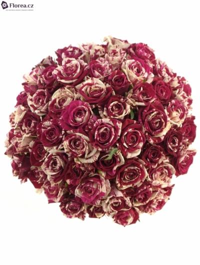 Kytice 55 žíhaných růží HARLEQUIN 50cm
