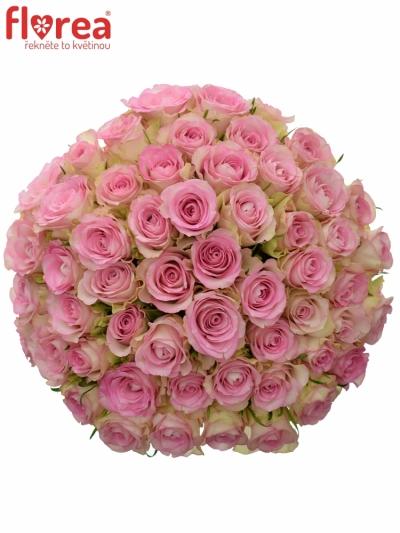 Kytice 55 žíhaných růží LOVELY JEWEL 40cm